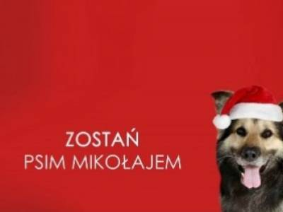 Finał akcji Zostań Psim Mikołajem